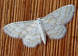 Moth_076